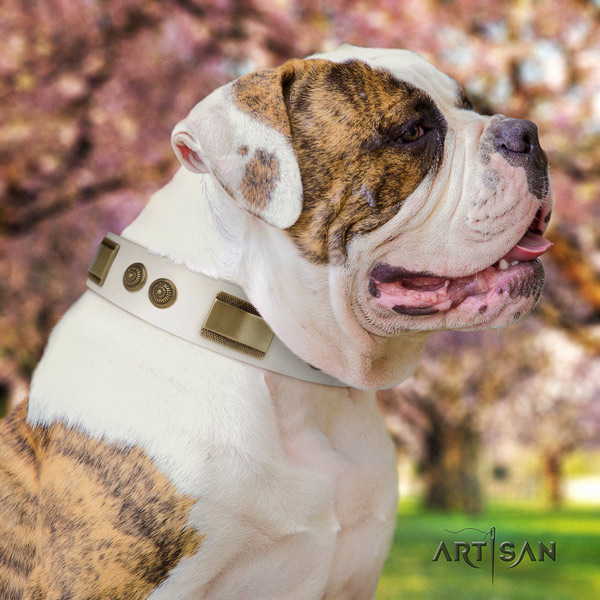 American Bulldog adorned full grain leather dog collar with exceptional adornments