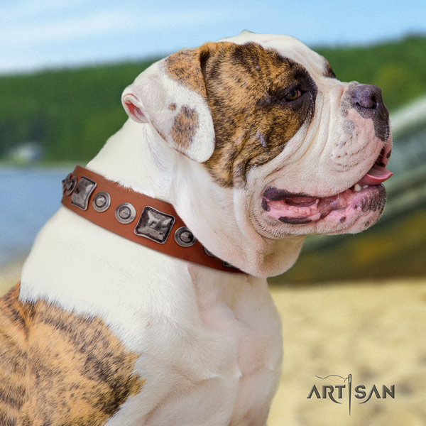 American Bulldog adorned leather dog collar with impressive adornments