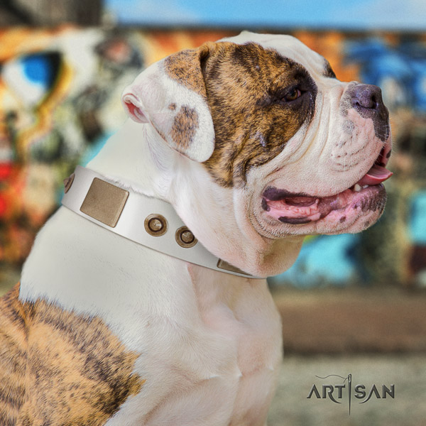 American Bulldog everyday walking genuine leather collar with studs for your pet