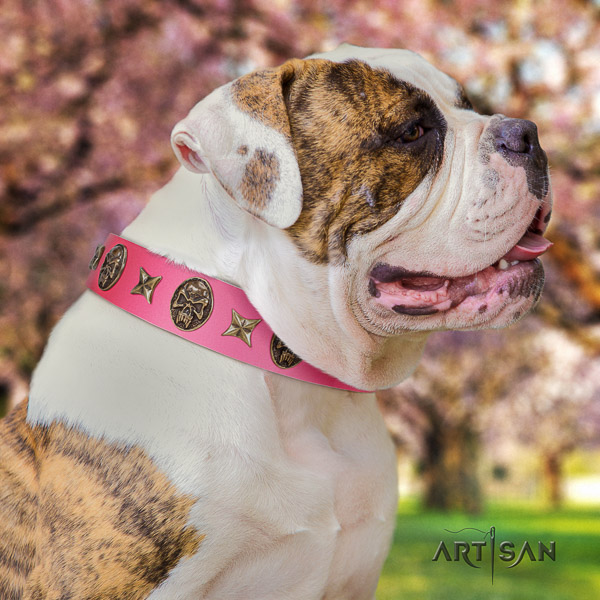 American Bulldog daily use leather collar with studs for your pet