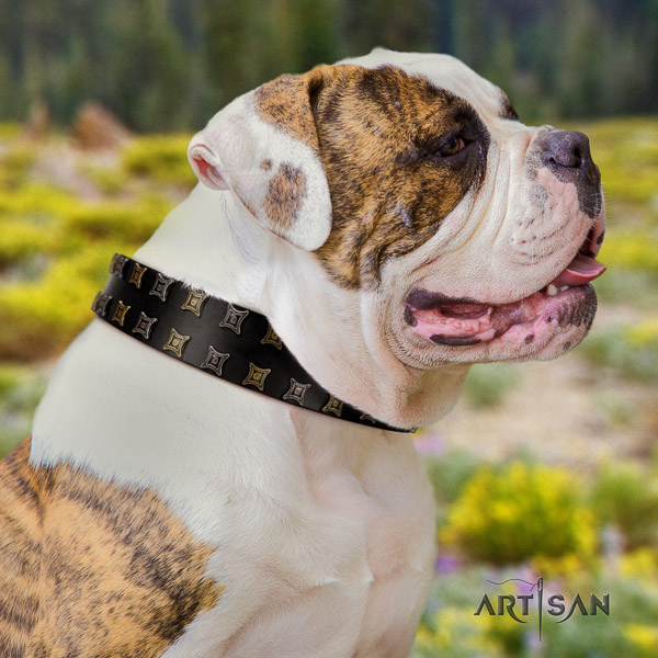 American Bulldog stylish walking leather collar with adornments for your four-legged friend