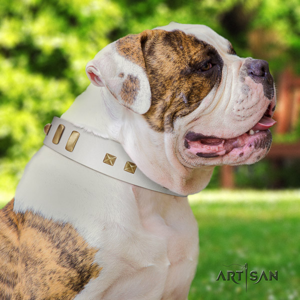 American Bulldog comfortable wearing full grain natural leather collar with decorations for your canine