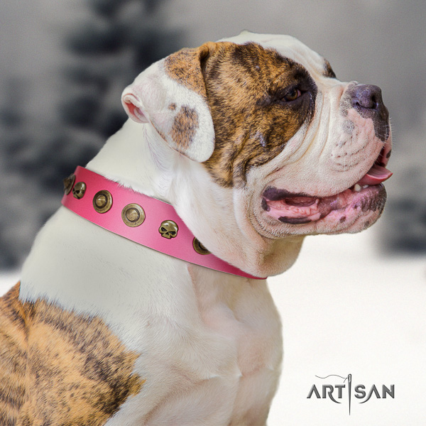 American Bulldog daily walking genuine leather collar with embellishments for your canine