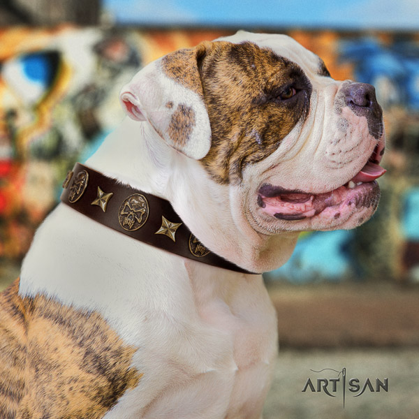 American Bulldog stylish walking full grain natural leather collar with studs for your pet