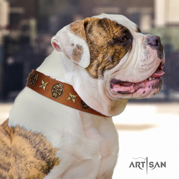 American Bulldog fancy walking full grain leather collar with studs for your pet