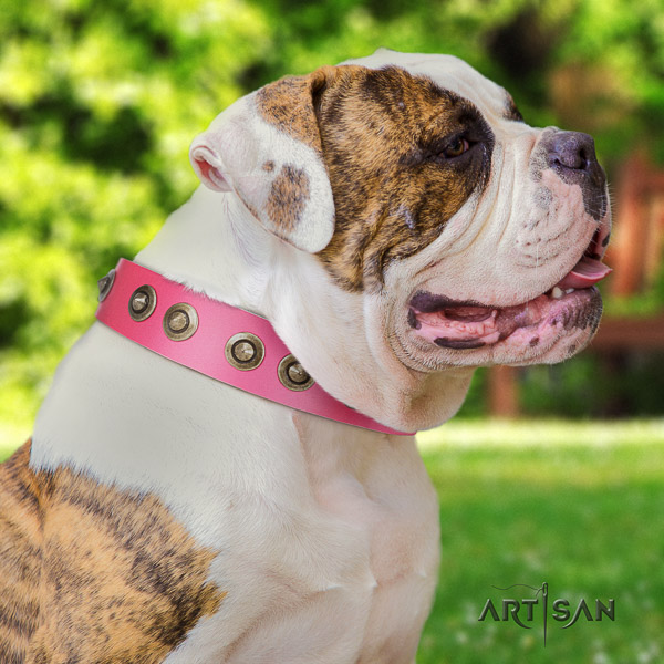 American Bulldog comfy wearing full grain natural leather collar with embellishments for your canine