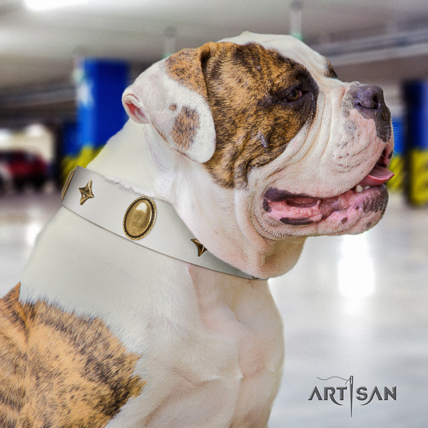 American Bulldog daily walking full grain genuine leather collar with decorations for your doggie