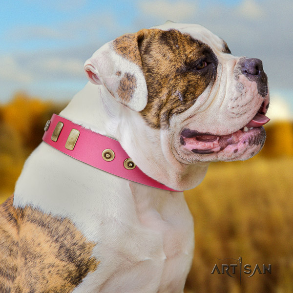 American Bulldog stylish walking leather collar with embellishments for your canine