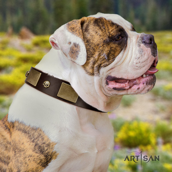 American Bulldog handy use genuine leather collar with decorations for your four-legged friend