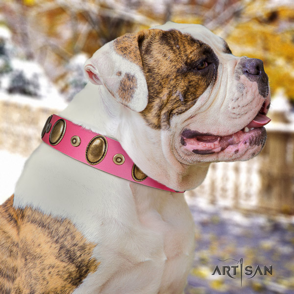 American Bulldog daily walking full grain genuine leather collar with adornments for your dog