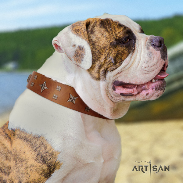 American Bulldog walking full grain leather collar with embellishments for your four-legged friend