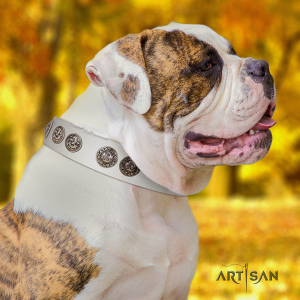 American Bulldog handy use full grain leather collar with decorations for your four-legged friend