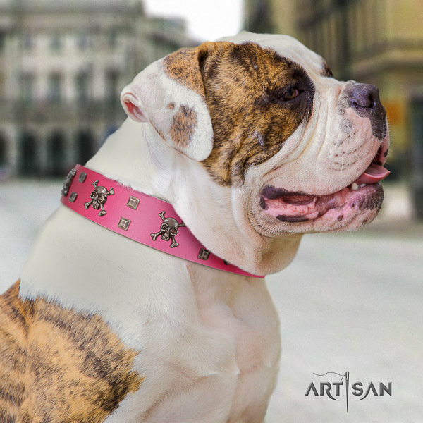 American Bulldog daily use full grain genuine leather collar with decorations for your pet