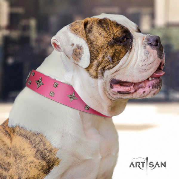 American Bulldog basic training leather collar with adornments for your canine