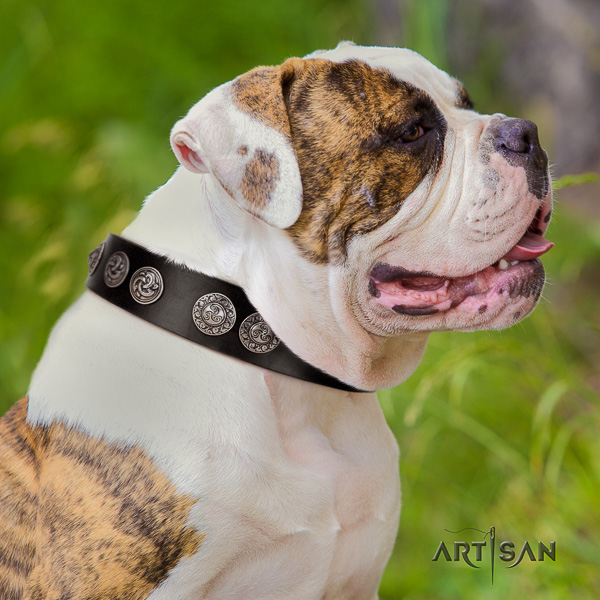 American Bulldog handy use full grain natural leather collar with decorations for your canine