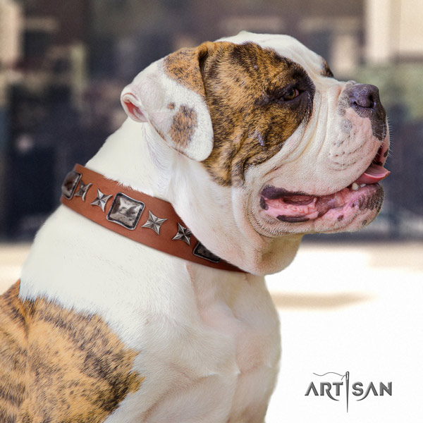 American Bulldog adorned full grain leather dog collar with exquisite decorations