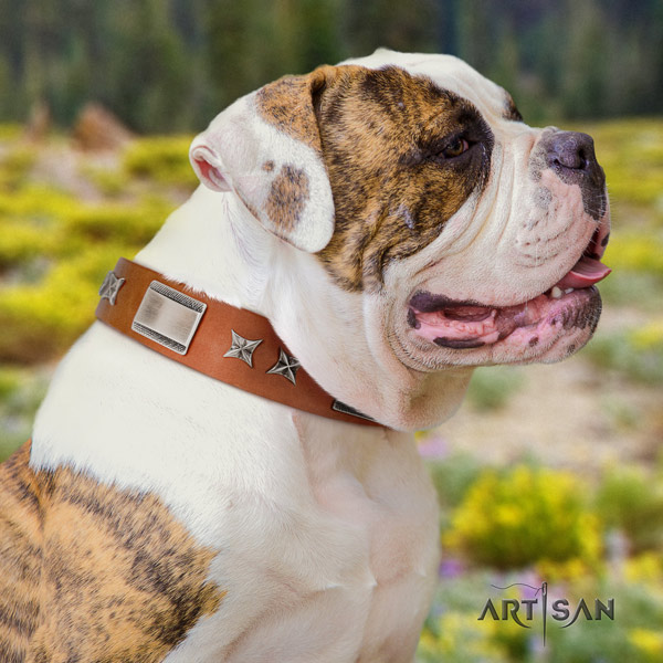 American Bulldog designer leather dog collar with embellishments