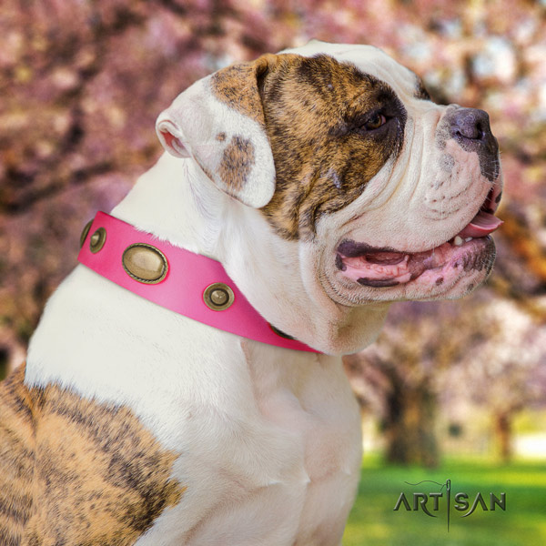 American Bulldog studded genuine leather dog collar with incredible embellishments