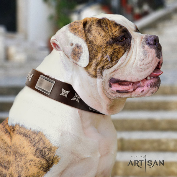 American Bulldog stylish full grain leather dog collar with embellishments