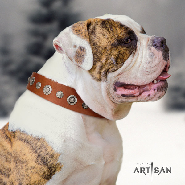 American Bulldog embellished genuine leather dog collar with stylish design adornments