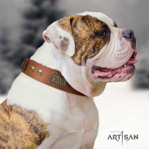 American Bulldog decorated genuine leather dog collar with designer embellishments