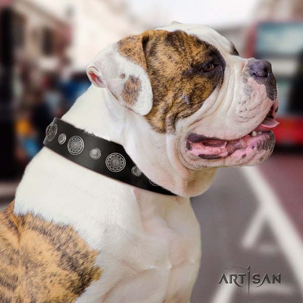 American Bulldog adorned leather dog collar with top notch decorations