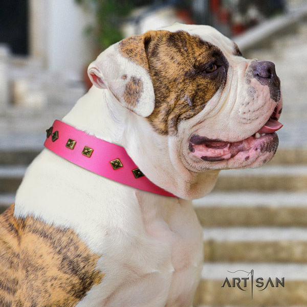 American Bulldog decorated leather dog collar with trendy studs