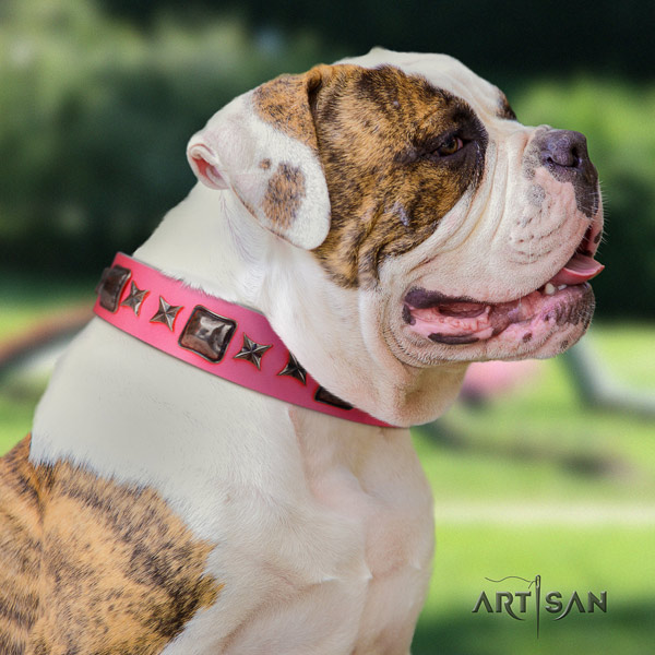 American Bulldog studded genuine leather dog collar with exquisite decorations