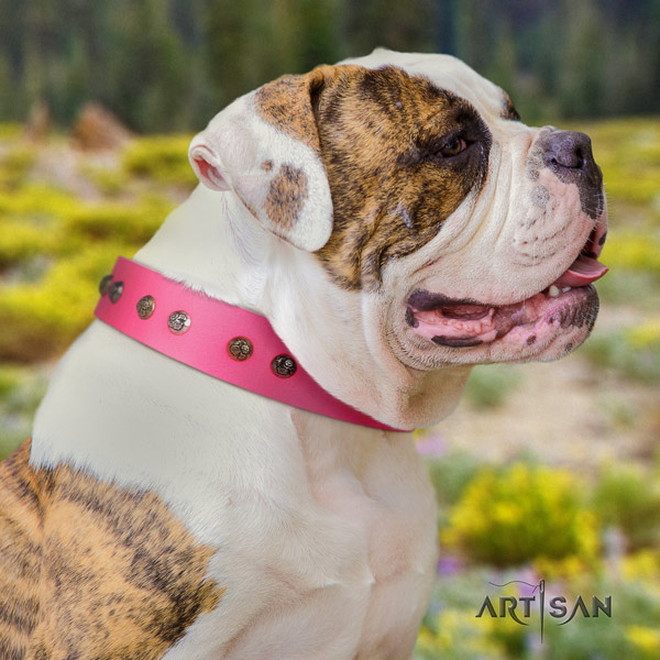 American Bulldog decorated full grain leather dog collar with significant embellishments
