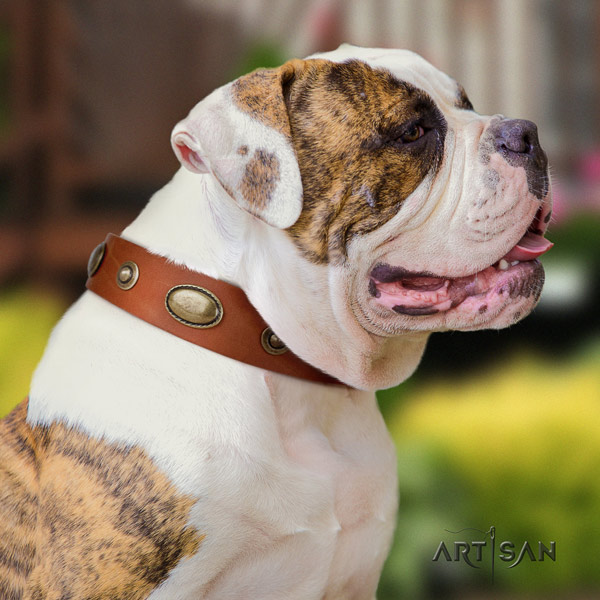 American Bulldog decorated leather dog collar with amazing studs