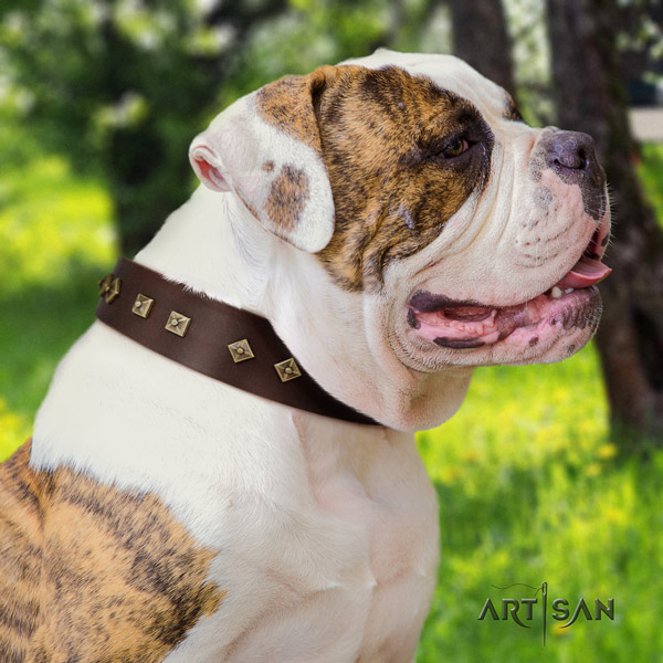 American Bulldog decorated genuine leather dog collar with stunning adornments