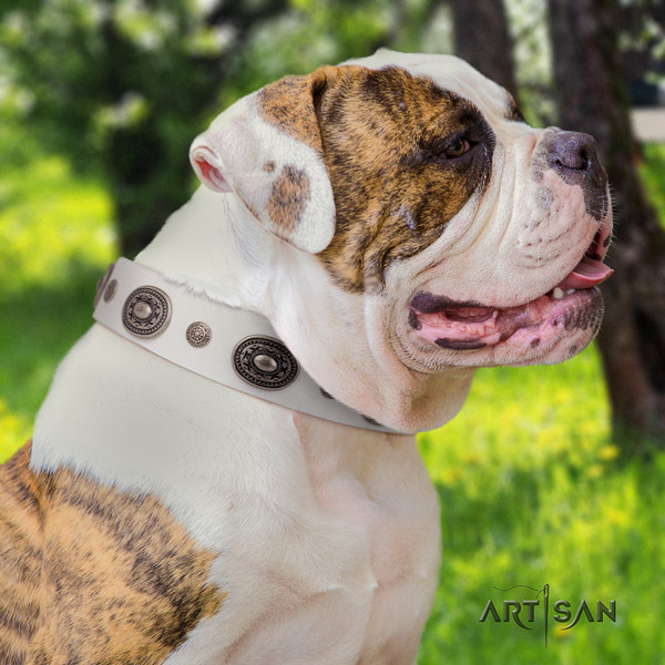 American Bulldog adorned leather dog collar with stylish design decorations