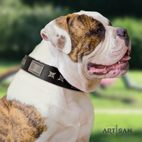 American Bulldog remarkable genuine leather dog collar with adornments