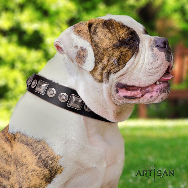 American Bulldog decorated full grain leather dog collar with remarkable embellishments