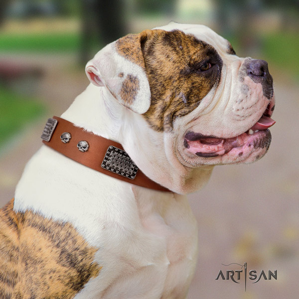 American Bulldog decorated genuine leather dog collar with unique embellishments