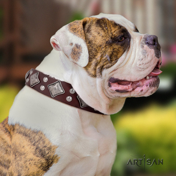 American Bulldog studded full grain leather dog collar with remarkable adornments