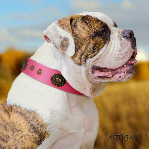 American Bulldog studded genuine leather dog collar with incredible decorations