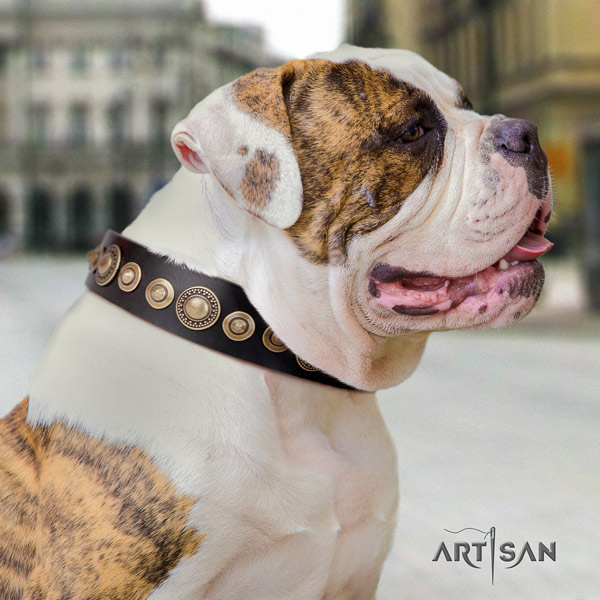 American Bulldog decorated full grain leather dog collar with fashionable decorations