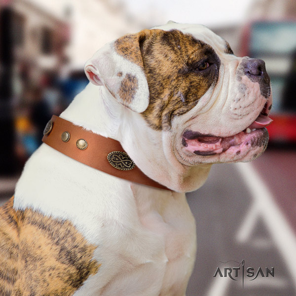 American Bulldog studded leather dog collar with incredible embellishments