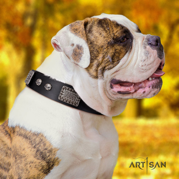 American Bulldog decorated genuine leather dog collar with exquisite adornments