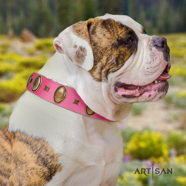 American Bulldog easy wearing leather collar with adornments for your four-legged friend