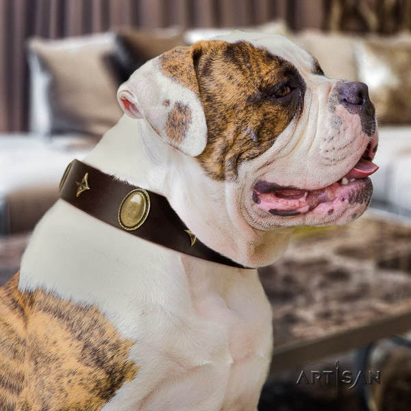 American Bulldog handy use genuine leather collar with decorations for your doggie