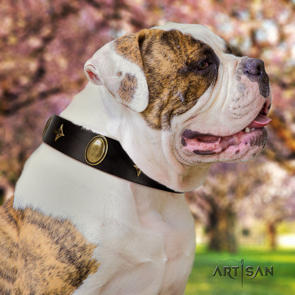 American Bulldog comfy wearing genuine leather collar with decorations for your canine