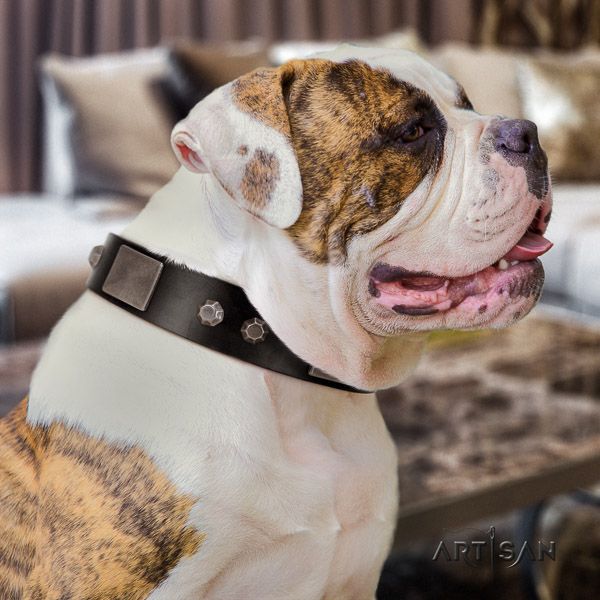 American Bulldog basic training leather collar with decorations for your dog