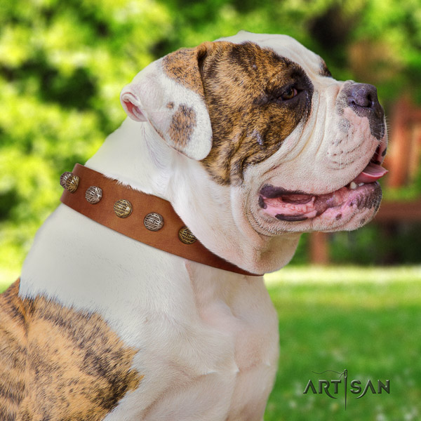American Bulldog stylish walking genuine leather collar with decorations for your doggie