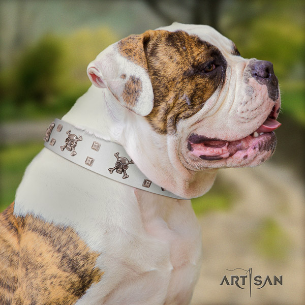 American Bulldog stylish walking leather collar with embellishments for your dog