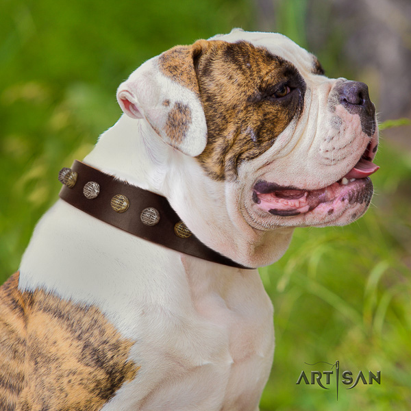American Bulldog basic training full grain leather collar with decorations for your four-legged friend