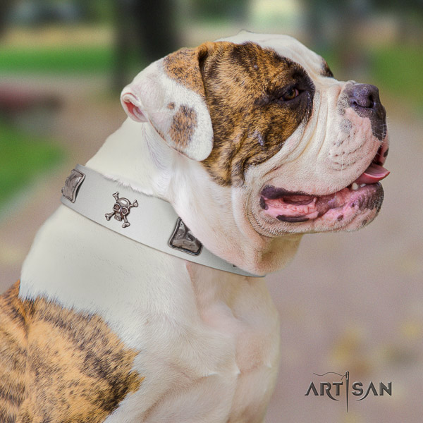 American Bulldog fancy walking natural leather collar with embellishments for your doggie