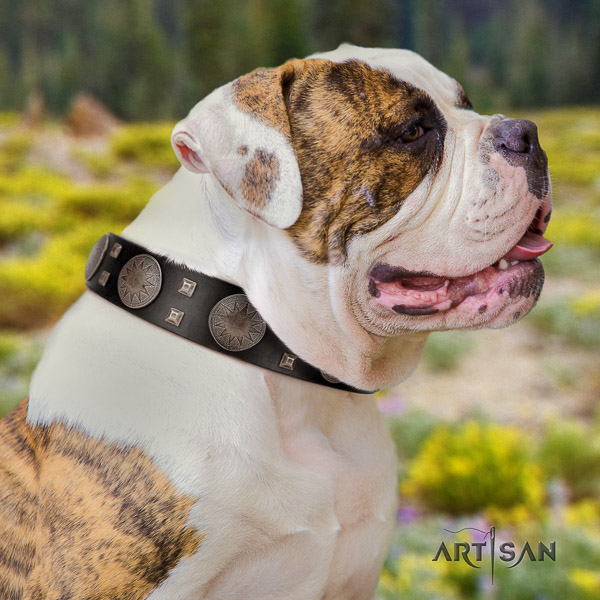 American Bulldog handy use full grain genuine leather collar with adornments for your pet