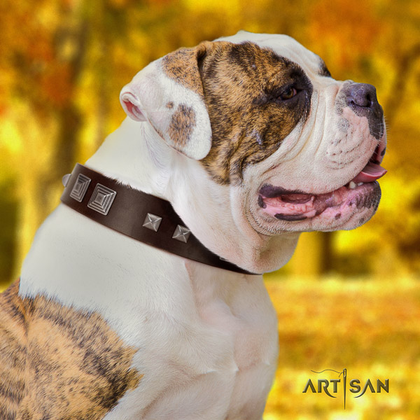 American Bulldog comfy wearing leather collar with embellishments for your canine